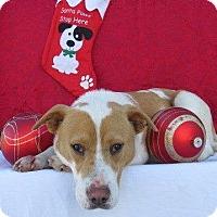 Adopt A Pet :: Lizzie - Joliet, IL