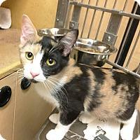 Adopt A Pet :: Izzy - Arlington/Ft Worth, TX