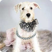 Adopt A Pet :: Calhoun-No Longer Accepting Applications - St. Louis Park, MN