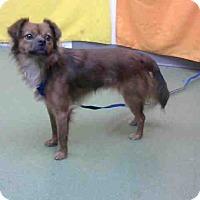 Terrier (Unknown Type, Medium) Mix Dog for adoption in San Bernardino, California - URGENT 10/19 @ DEVORE