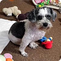 Adopt A Pet :: MILLS - Sumter, SC