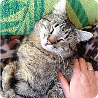 Adopt A Pet :: TJ - Arlington/Ft Worth, TX
