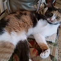 Adopt A Pet :: Tessa - Tampa, FL