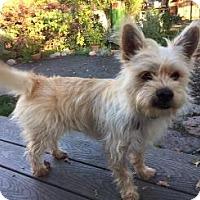 Adopt A Pet :: SAMMY - Pt. Richmond, CA