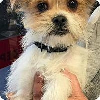 Adopt A Pet :: Henry - Spring, TX