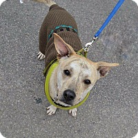 Adopt A Pet :: Legacy - Shinnston, WV