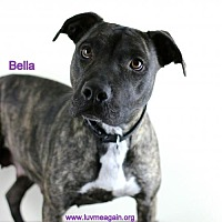 Adopt A Pet :: Bella - Bloomington, MN