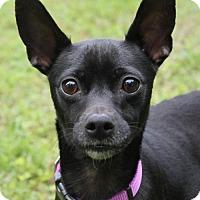 Adopt A Pet :: Onyx aka Brandy in New England - Providence, RI
