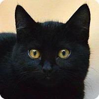 Adopt A Pet :: Corey - Sherman Oaks, CA