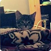 Adopt A Pet :: Charolette - Owatonna, MN