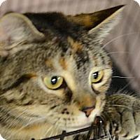 Adopt A Pet :: Beth - Muskegon, MI