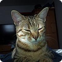 Adopt A Pet :: Squigy - Saint Albans, WV