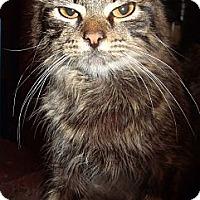 Adopt A Pet :: Tig - Porter, TX