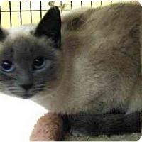 Adopt A Pet :: Catalina - Davis, CA