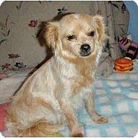 Adopt A Pet :: Bianca - Inglewood, CA
