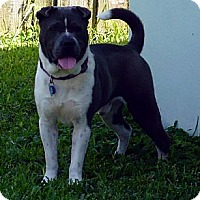 Adopt A Pet :: Spanky - Gainesville, FL