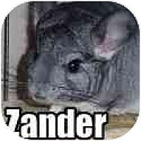 Adopt A Pet :: Zander - Virginia Beach, VA