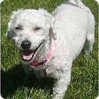 Adopt A Pet :: Cheri - La Costa, CA