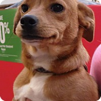 Adopt A Pet :: Bits - Westley, CA
