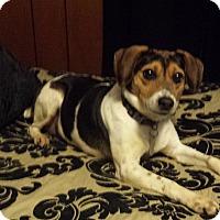 Adopt A Pet :: Tracey - Homewood, AL