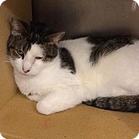 Adopt A Pet :: Miku - Colmar, PA