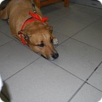 Adopt A Pet :: Seven - Pierrefonds, QC