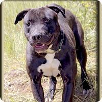 Adopt A Pet :: Maddison family dog - Sacramento, CA