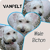 Adopt A Pet :: Van Pelt - Clear Lake, IA