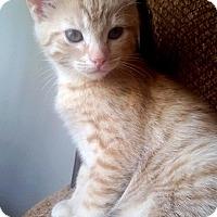 Adopt A Pet :: NALA - Madison, AL