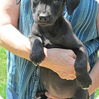 Adopt A Pet :: Onyx - Brookside, NJ