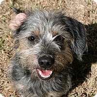 Adopt A Pet :: Conroe - Norwalk, CT