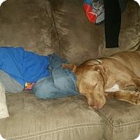Adopt A Pet :: Yankee - Las Vegas, NV