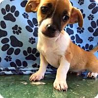 Adopt A Pet :: Marmaduke - Fort Lauderdale, FL