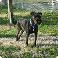 Adopt A Pet :: BRUNO (SRC#1794) IN VIRGINIA - Lenoir, NC
