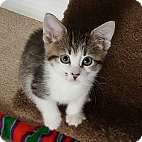 Adopt A Pet :: Rainier - Duluth, GA