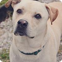 Adopt A Pet :: Hooch - Loxahatchee, FL