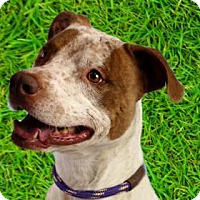 Adopt A Pet :: PEPPER - Palm Springs, CA