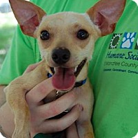 Adopt A Pet :: Rambo - Bradenton, FL