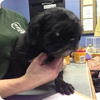 Adopt A Pet :: 48374 Nike (dental scheduled at time of neuter) - Zanesville, OH
