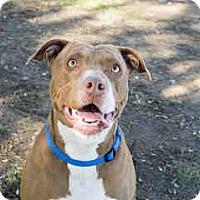Adopt A Pet :: Lola - Agoura, CA
