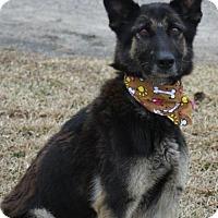 Adopt A Pet :: Bailey - Kinston, NC