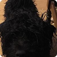 Adopt A Pet :: Yeungling - Worcester, MA