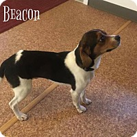 Adopt A Pet :: Beacon - Harrisville, WV