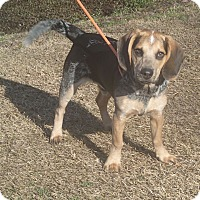 Adopt A Pet :: Freemont - Newport, NC