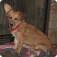 Adopt A Pet :: Kimmie - Golden Valley, AZ