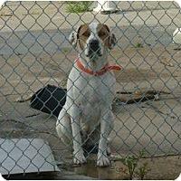 Adopt A Pet :: Lilly - Hubertus, WI