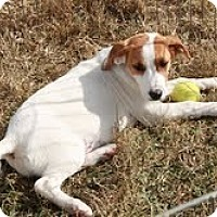 Adopt A Pet :: Adorable Daisy - Staunton, VA