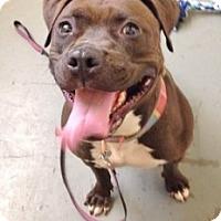 Adopt A Pet :: Nestle - Medford, MA