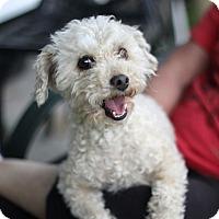 Adopt A Pet :: William - Long Beach, NY