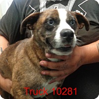 Adopt A Pet :: Truck - baltimore, MD